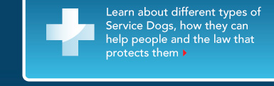 Learn about the types of Service Dogs